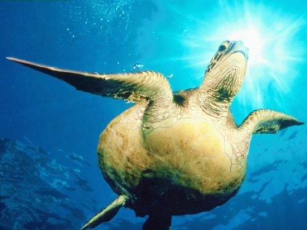 tortuga marina 4