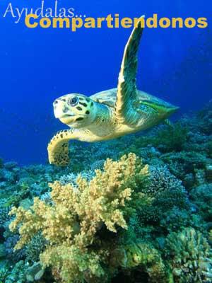especies de tortugas marinas tortugamarinapedia
