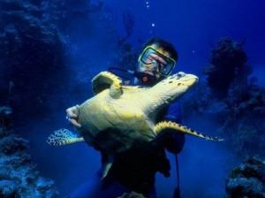 tortuga marina con buzo