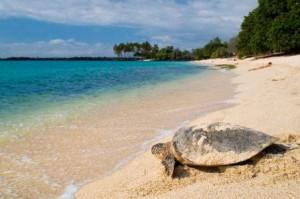 tortuga marina en la playa