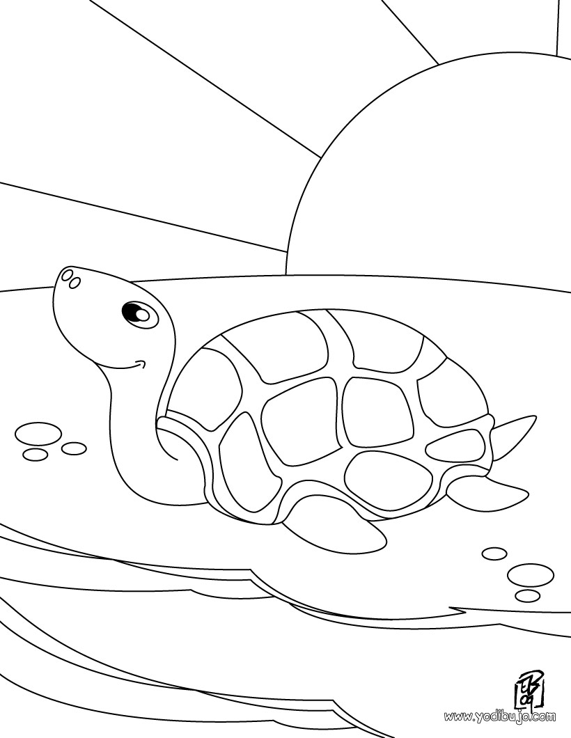 Dibujos de tortugas marinas | TORTUGAMARINAPEDIA