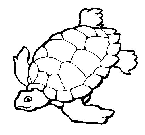 dibujo tortuga1